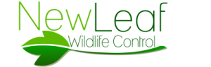 New Leaf Wildlife Control