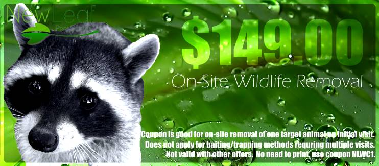 Wildlife removal Portland OR