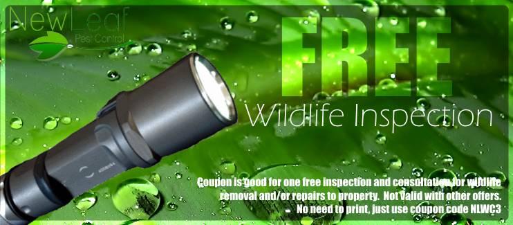 Free Wildlife Inspection Portland