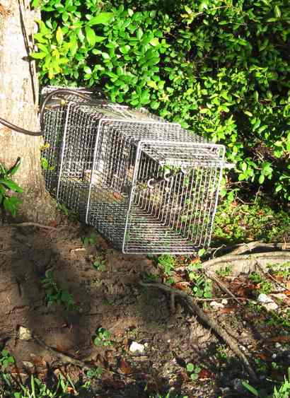 Custom Wildlife Trapping