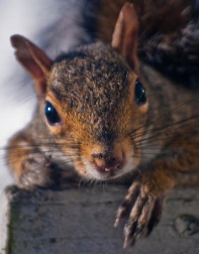 Portland OR Squirrel Control