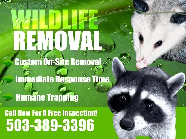 Portland Wildlife Control Removal